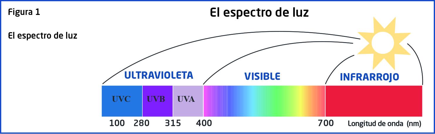 Efectos de la radiación UV en los ojos y diferentes tipos de daño ... 6232b8d998da3